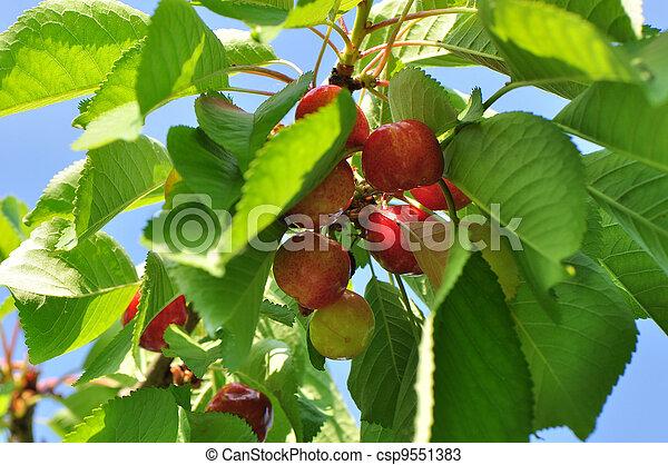 桜の木 - csp9551383