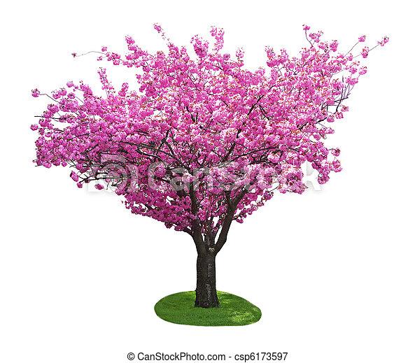 桜の木 - csp6173597