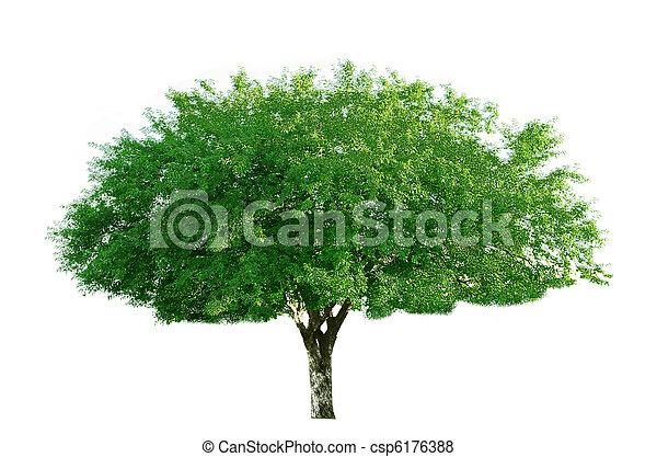 桜の木 - csp6176388