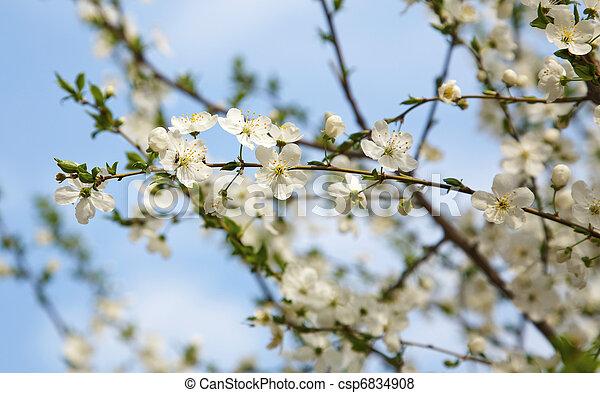 桜の木 - csp6834908
