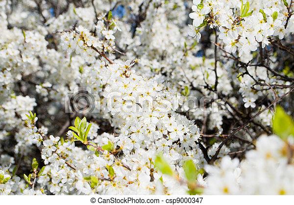 桜の木 - csp9000347