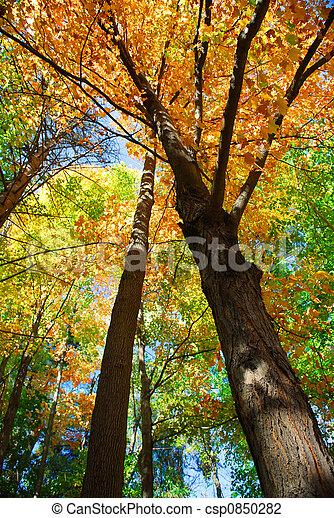 森林, 秋 - csp0850282