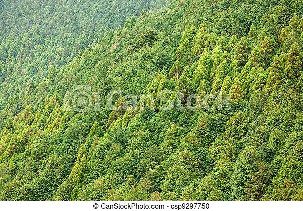 森林, 背景, 针叶树 - csp9297750