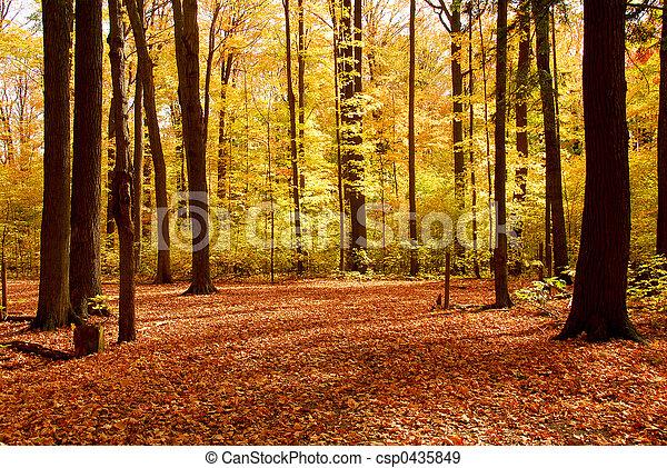 森林, 风景, 落下 - csp0435849