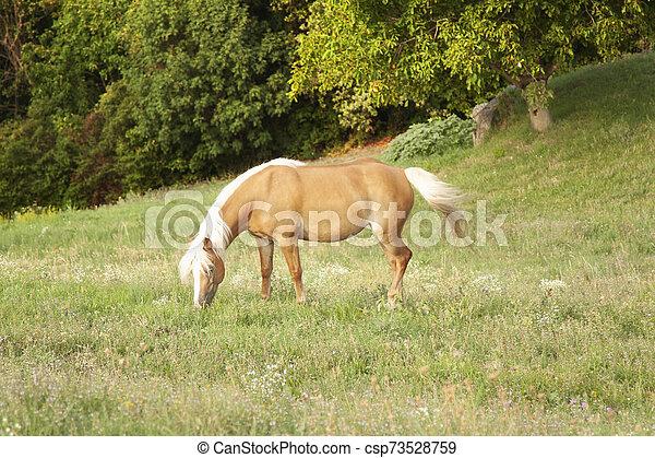 森, 脚立が草を食べる, 無料で - csp73528759