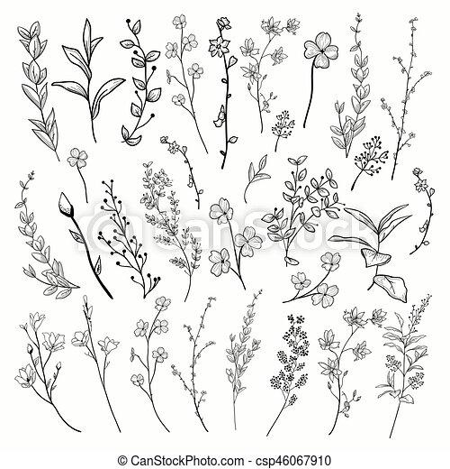 植物 イラスト Flowers ベクトル 黒 ハーブ 引かれる 植物