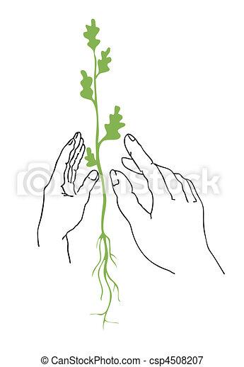 植物, ベクトル, イラスト, 手 - csp4508207