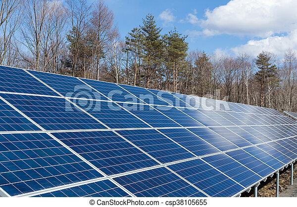 植物, 太陽エネルギー, 力 - csp38105655