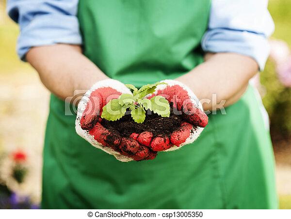 植物, 女性の保有物, 手, 小さい - csp13005350