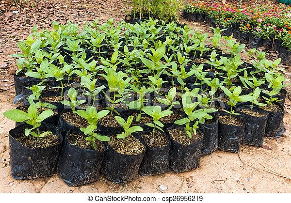 植物, 年輕 - csp26956219