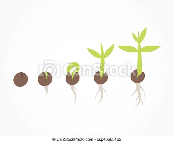 植物 段階 種 発芽 植物 プロセス イラスト ベクトル 発芽 種
