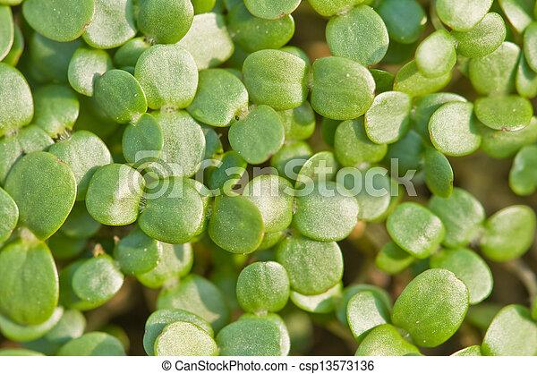植物 - csp13573136