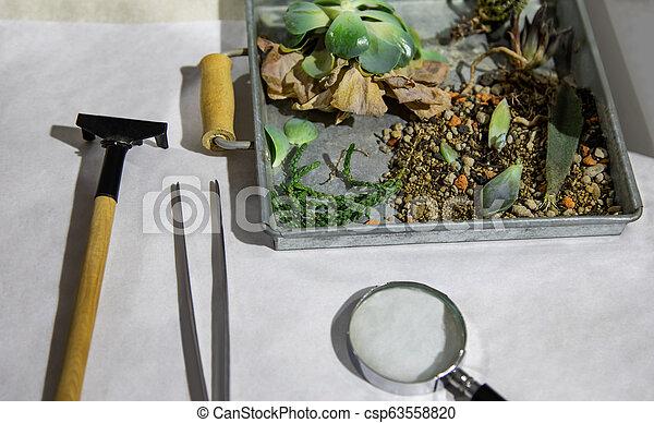 植物, 箱, tools. - csp63558820