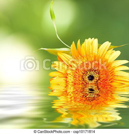 植物, 自然, 反映, 水, 背景, spa - csp10171814