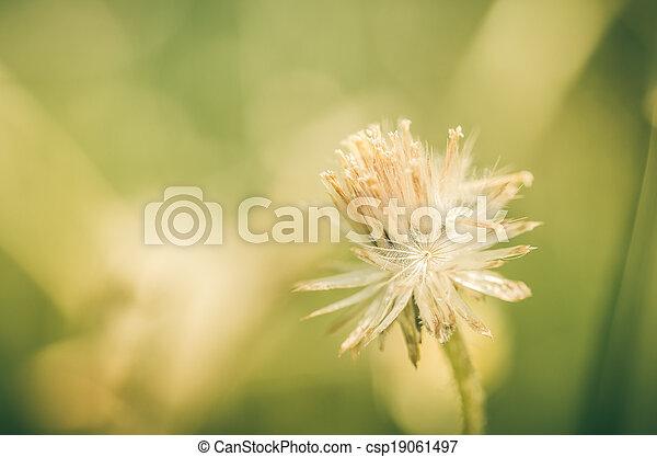 植物, 花 - csp19061497