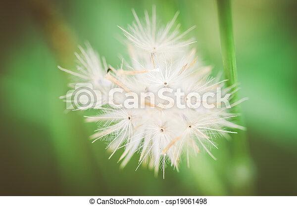 植物, 花 - csp19061498