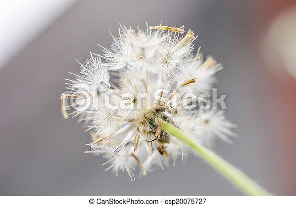 植物, 花 - csp20075727