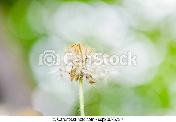 植物, 花 - csp20075730