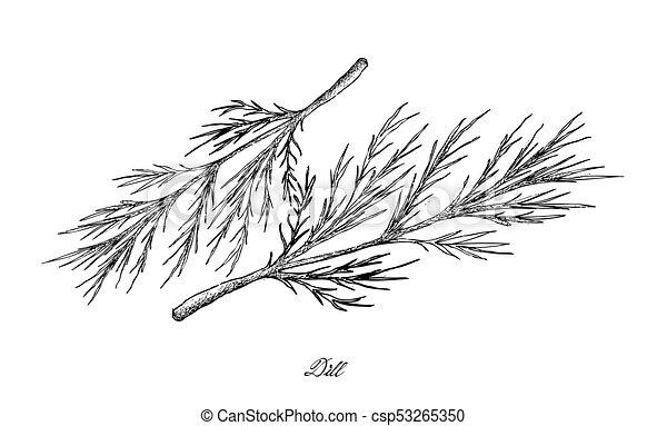植物, dill, 手, 背景, 引かれる, 白 - csp53265350