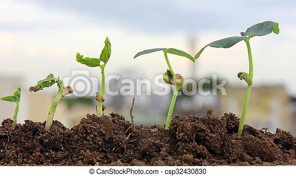 植物, growth-new, 生活 - csp32430830