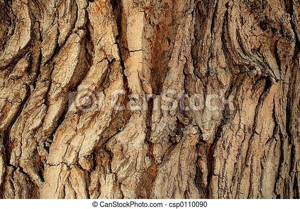樹皮, 木 - csp0110090