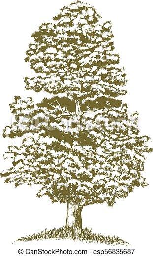 樹, 木刻, 杜松 - csp56835687