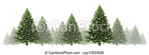 樹, 邊框, 冬天, 松樹 - csp10834826