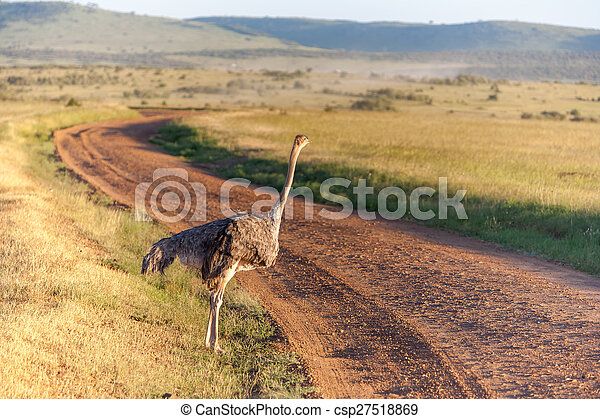 歩くこと, アフリカ。, ダチョウ, safari., kenya, サバンナ - csp27518869