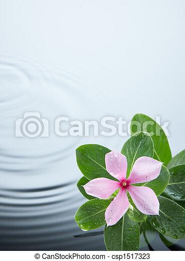 水さざ波, 植物, 花 - csp1517323