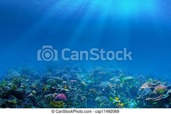 水下, 珊瑚礁, 背景 - csp11492069