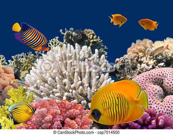 水中 生命, hard-coral, エジプト, 海, 赤, 砂洲 - csp7014500