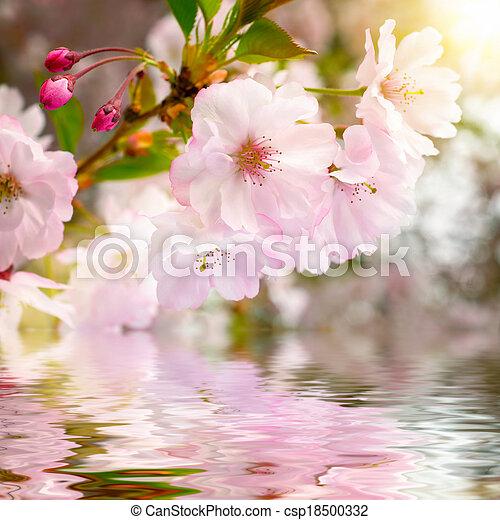 水, 樱桃, 反映, 花 - csp18500332
