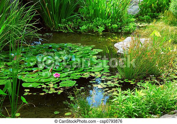 池, 美化 - csp0793876