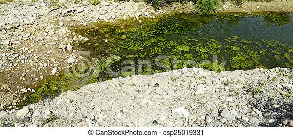 池, fish, 古典である, 庭, 美しい - csp25019331