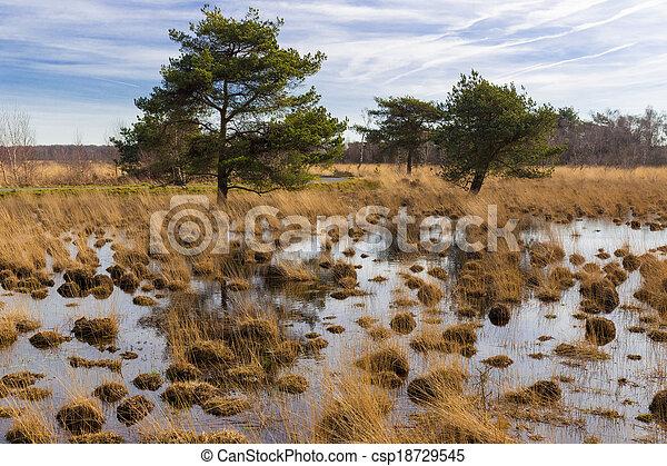 泥地, 国立公園, 木 - csp18729545