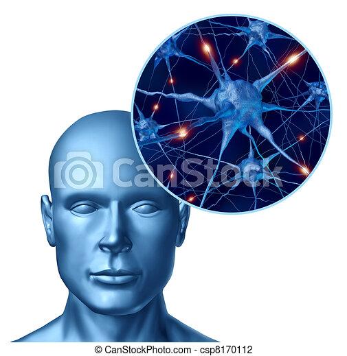 活動的, 知性, neurons, 人間 - csp8170112