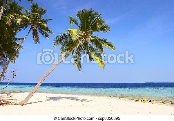 浜, ヤシの木, すてきである - csp0350895