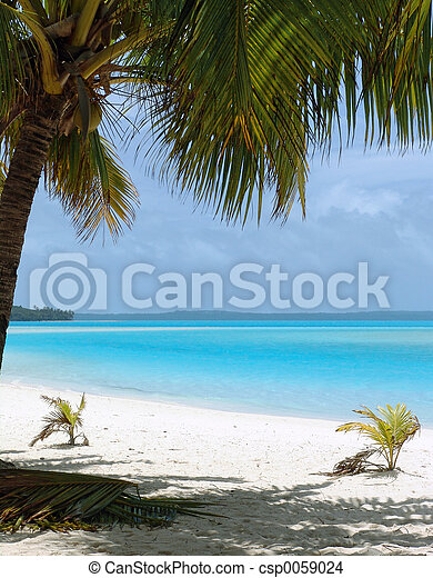 浜, ヤシの木 - csp0059024