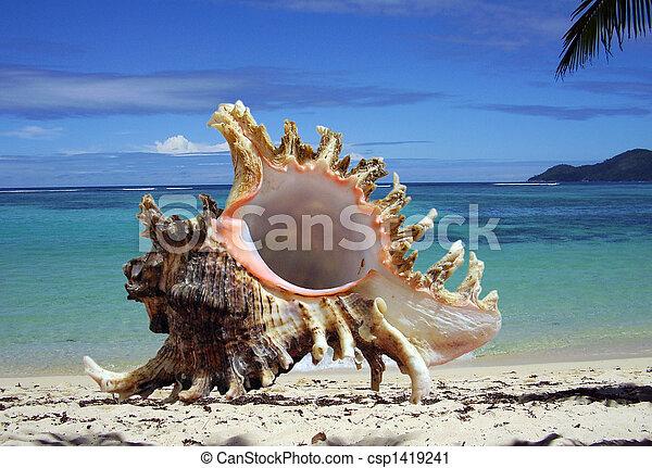 浜, cockleshell - csp1419241