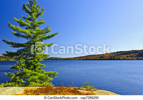 海岸, 木, 湖, 松 - csp7286290