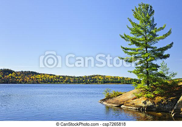 海岸, 木, 湖, 松 - csp7265818