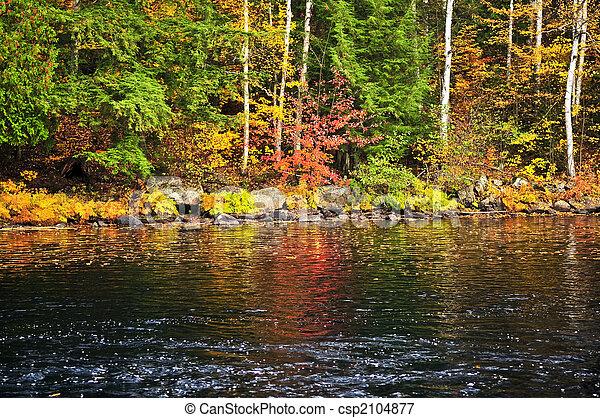 海岸, 秋, 湖の 森林 - csp2104877