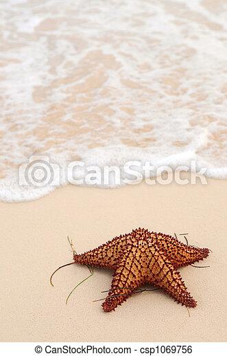 海洋, ヒトデ, 波 - csp1069756