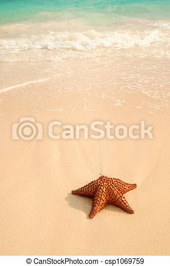 海洋, ヒトデ, 波 - csp1069759