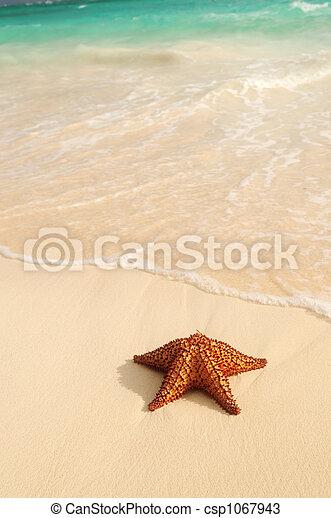 海洋, ヒトデ, 波 - csp1067943
