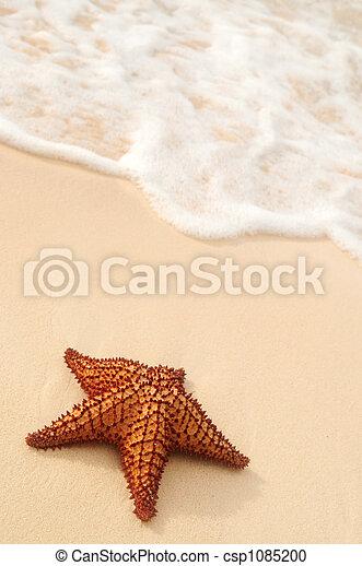 海洋, ヒトデ, 波 - csp1085200