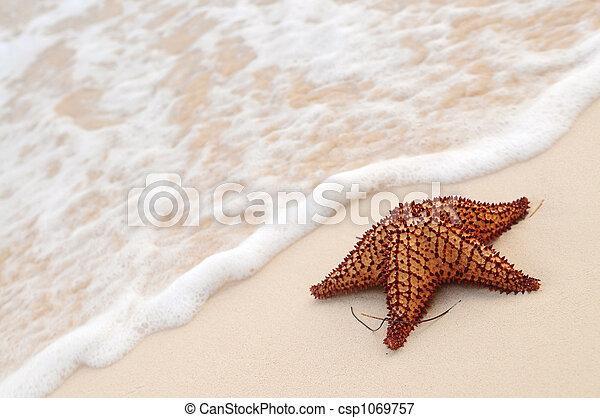 海洋, ヒトデ, 波 - csp1069757