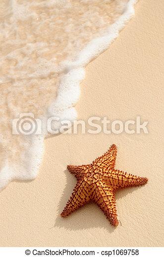 海洋, ヒトデ, 波 - csp1069758