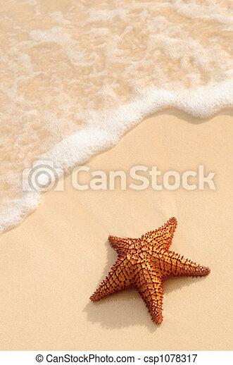 海洋, ヒトデ, 波 - csp1078317