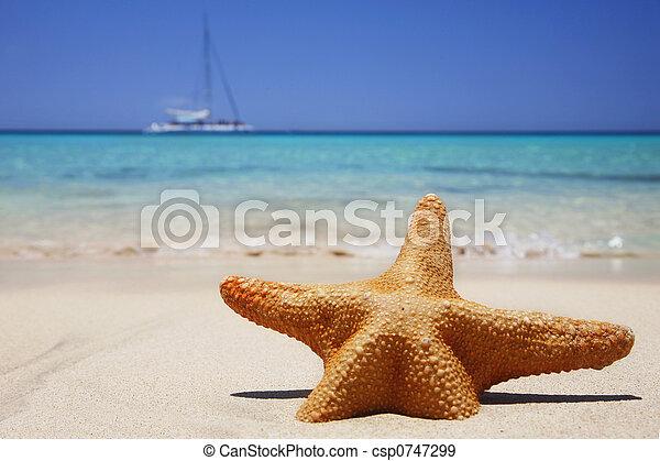 海灘, starfish - csp0747299